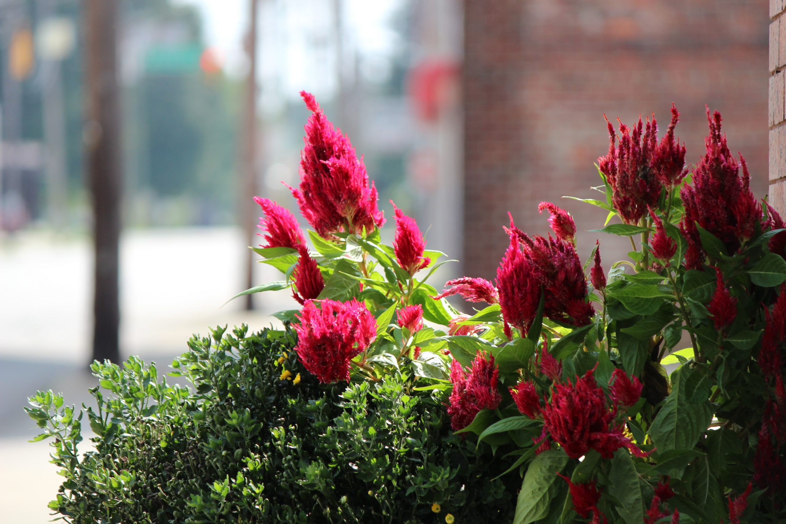 small town street flowers