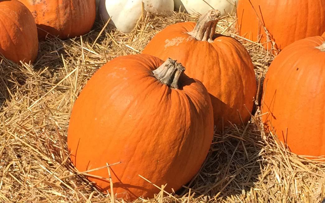 pumpkins photo by Kay Whatley